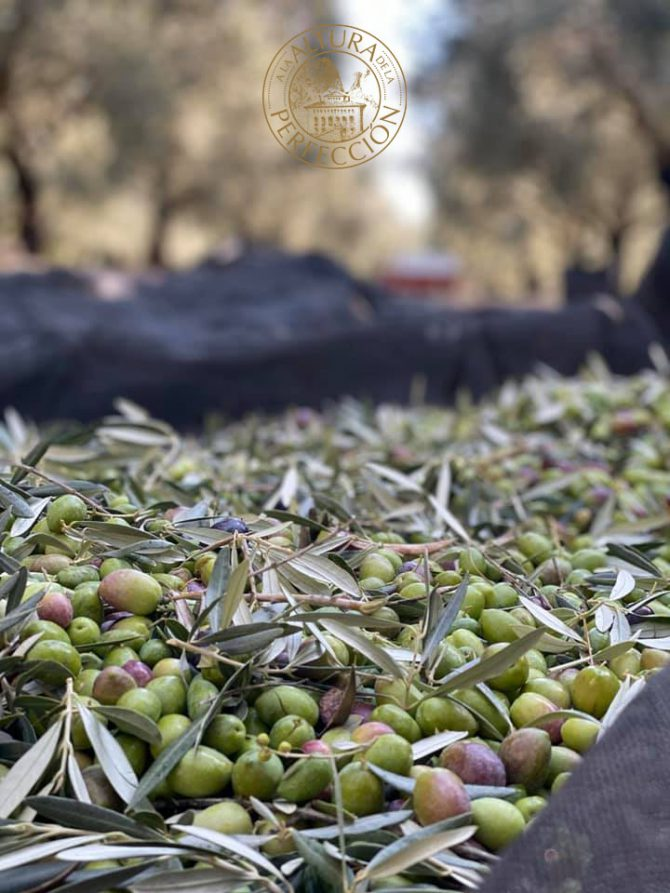 Green olive oil. Are you certain it's the highest quality one?