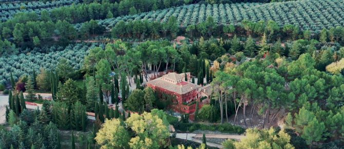 Olive tree cultivation: all of the stages